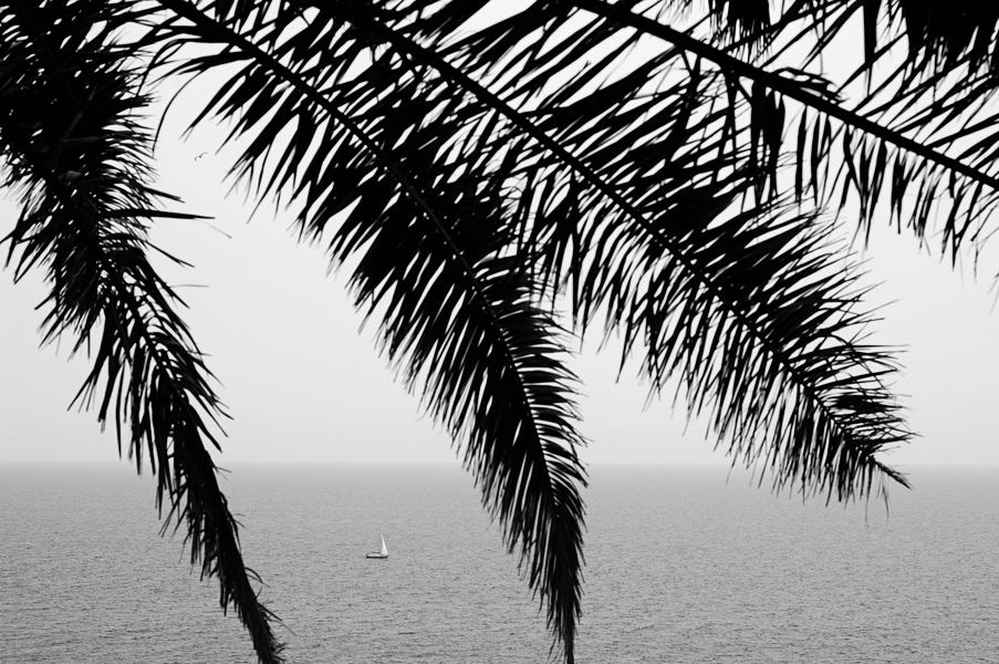 Holistic Photography Sea Palms Boat