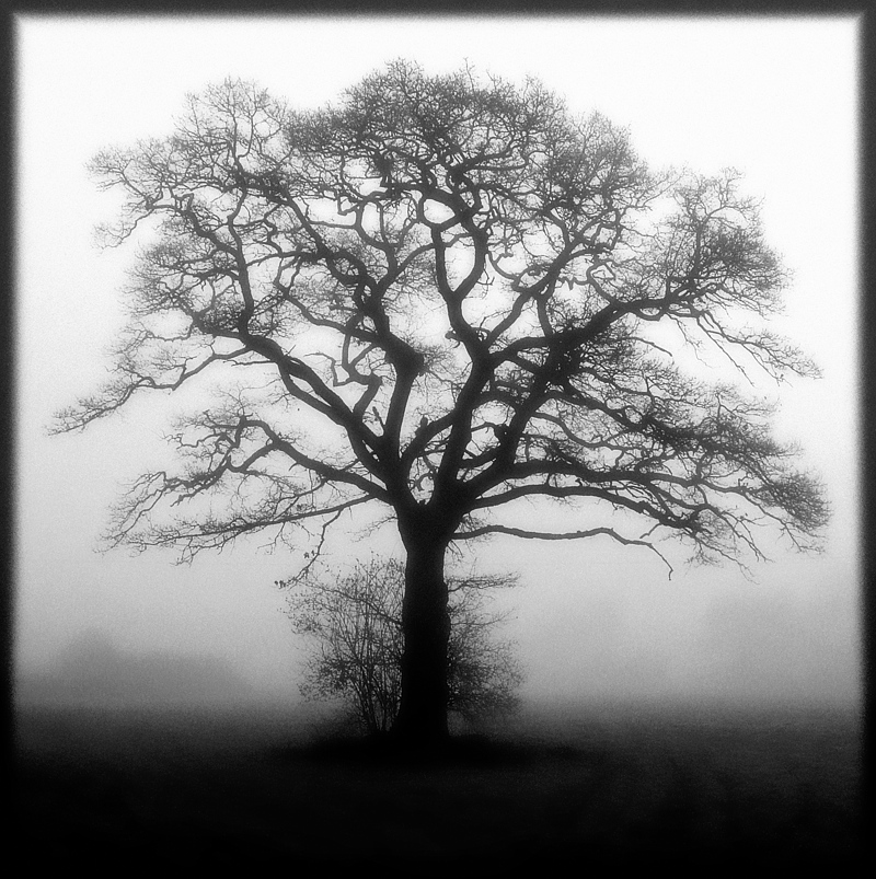 holistic_photography_diffused_lighting_tree_mistiness